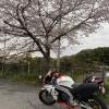 持尾展望台で桜とRS4