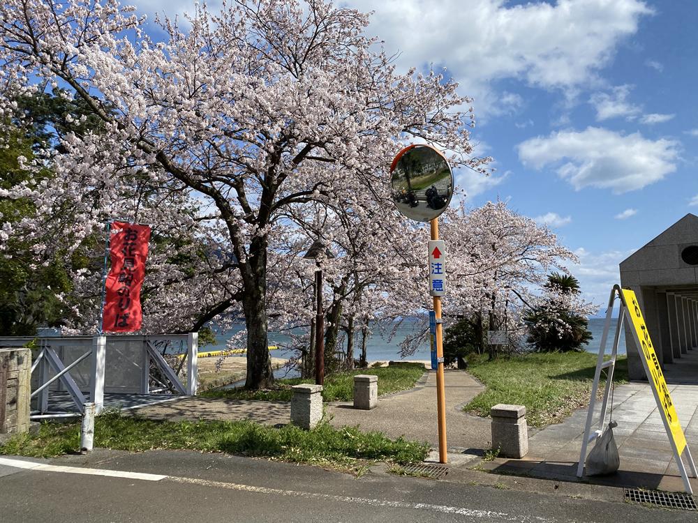 琵琶湖の海津大崎の桜満開ツーリング その11