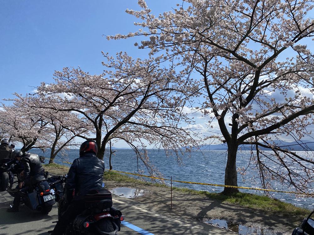 琵琶湖の海津大崎の桜満開ツーリング その12