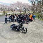琵琶湖の海津大崎の桜満開ツーリング その14