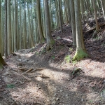 ぴょんぴょん林道の坂